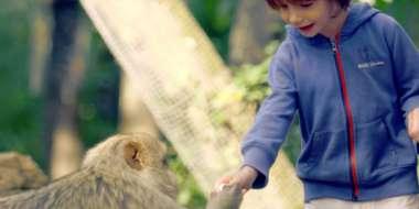 Un enfant tend sa main au singe