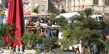560 ème foire aux arbres et aux plantes