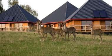Le site Zoologique de Cerza