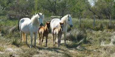 Maison du cheval de Camargue