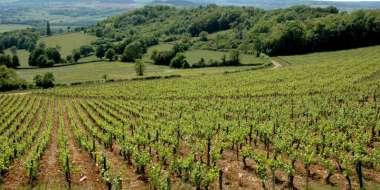 Découverte des vignobles du Vézelien
