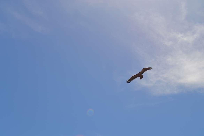 Kuzco, libre comme l'air au dessus de Rocamadour