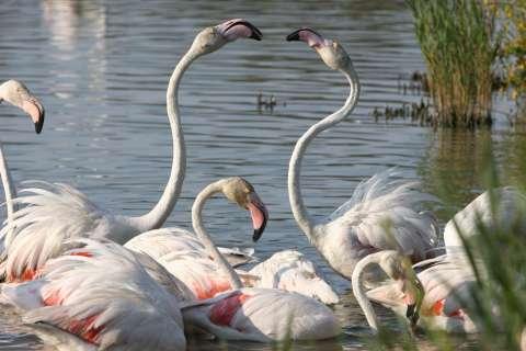 Au parc ornithologique