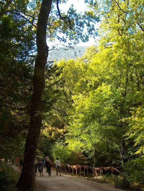 Chemin forestier vers la grotte